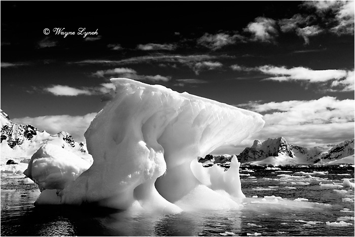 Paradise Bay Antarctic Peninsula 108 BW  by Dr. Wayne Lynch ©