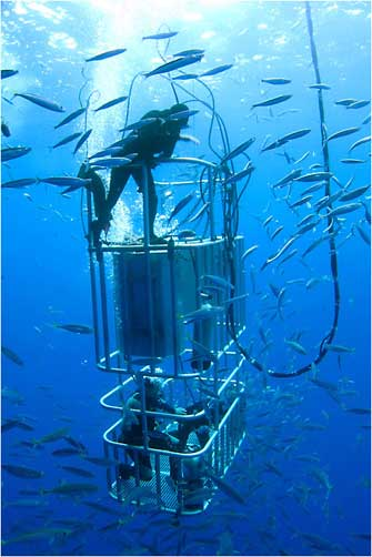Cage Diving for Sharks, Mexico 2011