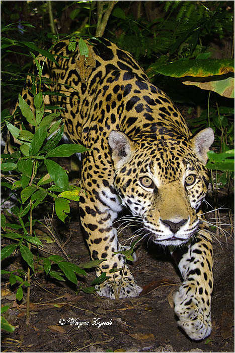 30 Kinds of Tropical Rainforest Animals With Pictures